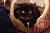 Meatloaf Loves Her Catnip Joints!