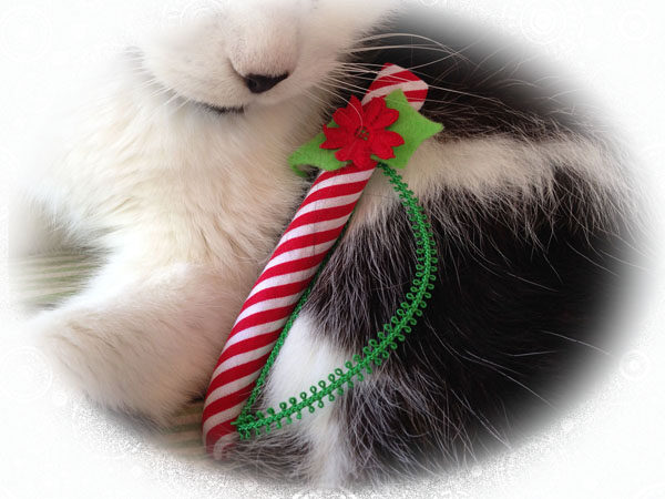 Pookie and Candy Cane