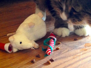 Tamale the Cat with Merry-Mouse Catnip Toy