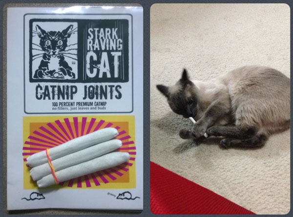 Jack Loves His Catnip Joints from Stark Raving Cat
