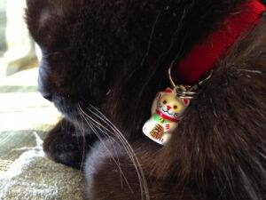 Lucky Bell Collar