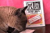 Catnip Joint Party!