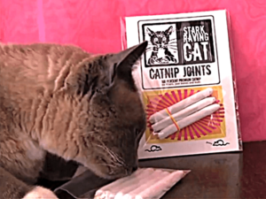 Furball and Catnip
