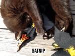 Batnip Cat Toy Play
