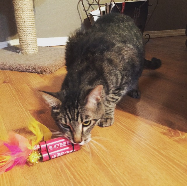 Cat with Acme TNT Stick