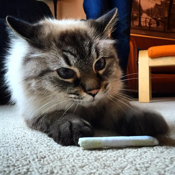 Cat with Catnip Joint