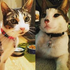 Mushu & Zinc with Neko Cat Collars