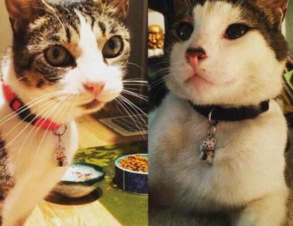 Mushu & Zinc with Neko Cat Collars