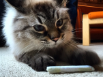 Puff with Catnip Joint