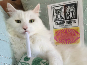 Stratus with Catnip Joint