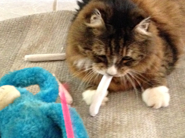 Tamale with Catnip Joint
