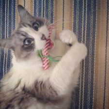 Wolfie got his catnip xmas joint