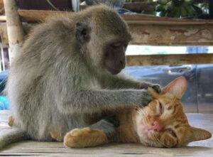 Monkey & Cat