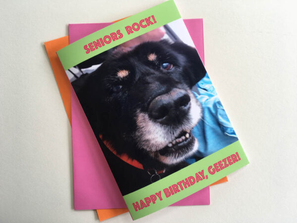 Koko Senior Greeting Card