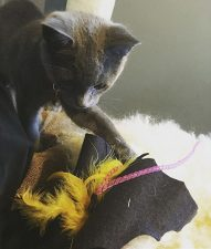 Coal the Cat with Batnip In Black