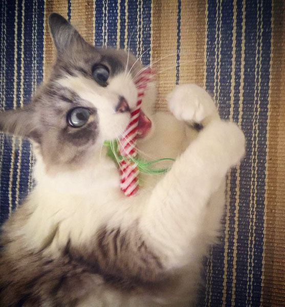 Cat with Catnip Candy Cane