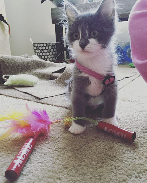 Cat with TNT Sticks