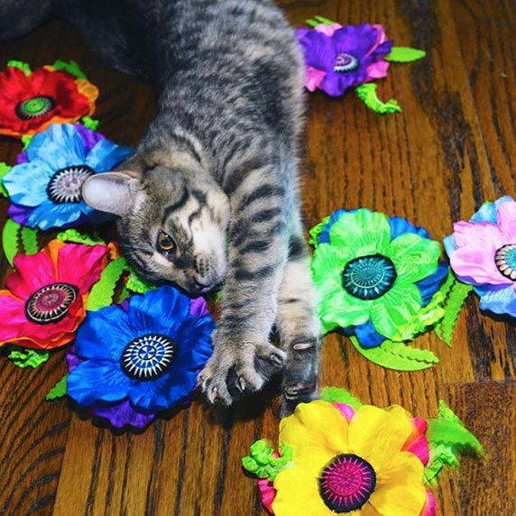 Cat with Giant Catnip Poppy