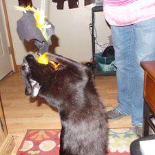 Tycho loves his bat