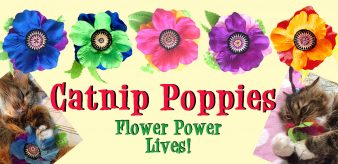 Giant Catnip Poppies