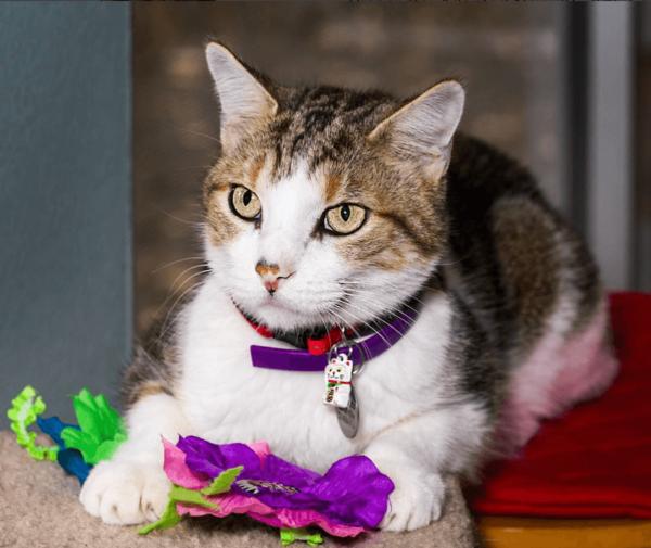 Prosciutto & Neko Cat Collar @dallasjeff