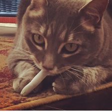 Cat with Joint by adaemi04
