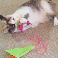 Megan Robbins cat with batnip