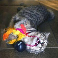 Tortellini with Acme Cat Bomb