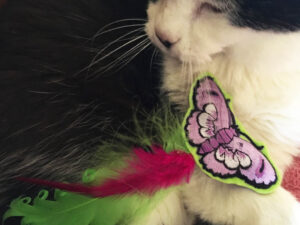Happy Butterfly Catnip Toy