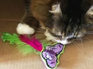 Happy Butterfly Catnip Toy