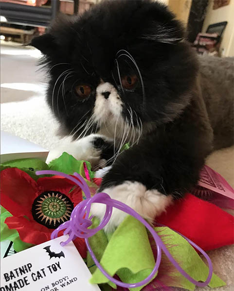 Cat with Giant Catnip Poppy