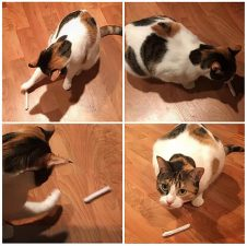 Calico and Catnip Joint