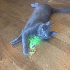 Yeezycat & catnip confetti