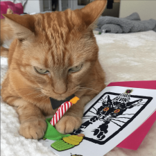 Fluffycatcrew with Catnip Birthday Candle