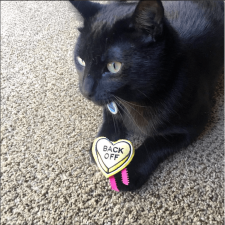 Yeezy with Love Bites Catnip Hearts