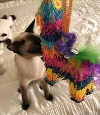 Crystal Sniffs Piñata