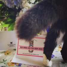 Pookie with Cat Moms Card
