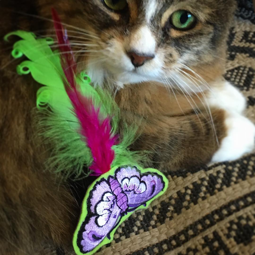 Tamale and Happy Butterfly Catnip Toy