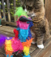 Tamale with Catnip Piñata (Bull)