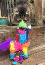 Tamale with Catnip Piñata (Bull)