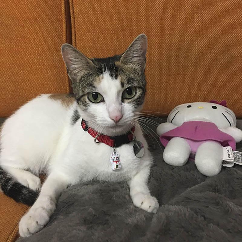 Cat with Neko Lucky Cat Bell and Breakaway Cat Collar