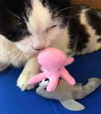 Pooks with Catnip Beach Babies Octopus and Shark
