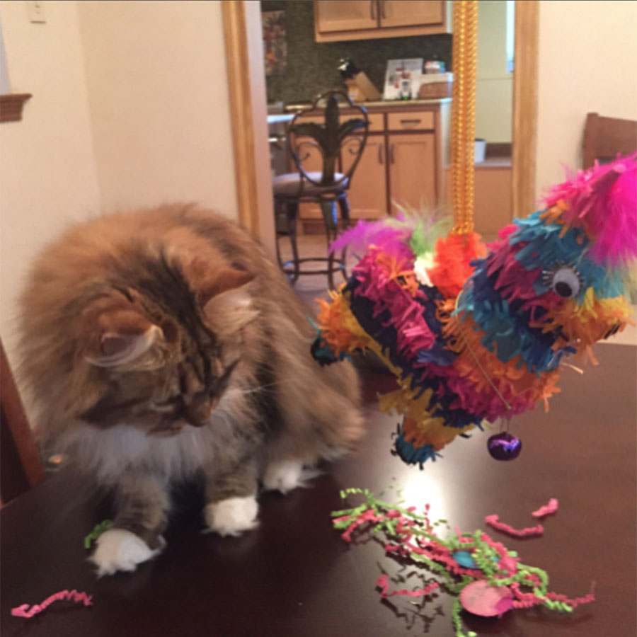 Cat with Catnip Piñata