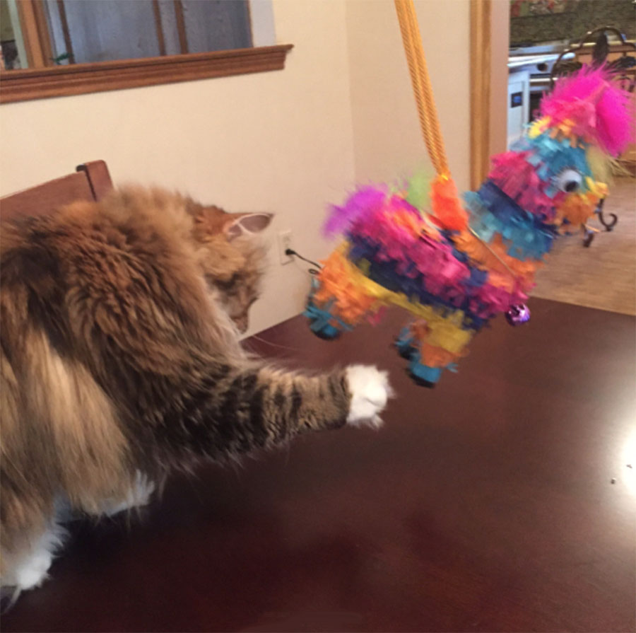 Leila with pinata