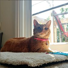 Annie models her favorite Neko collar