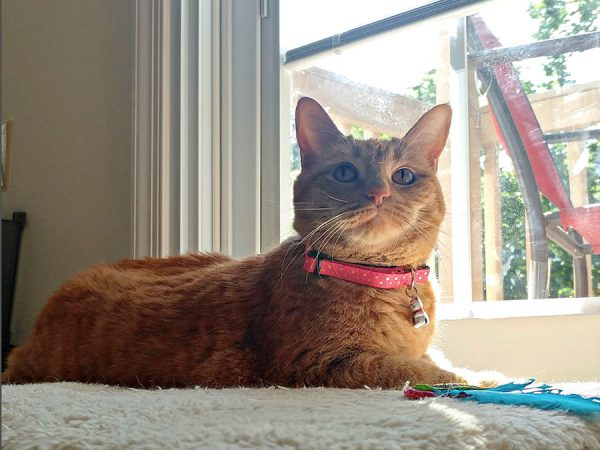 Annie models her favorite Neko cat collar
