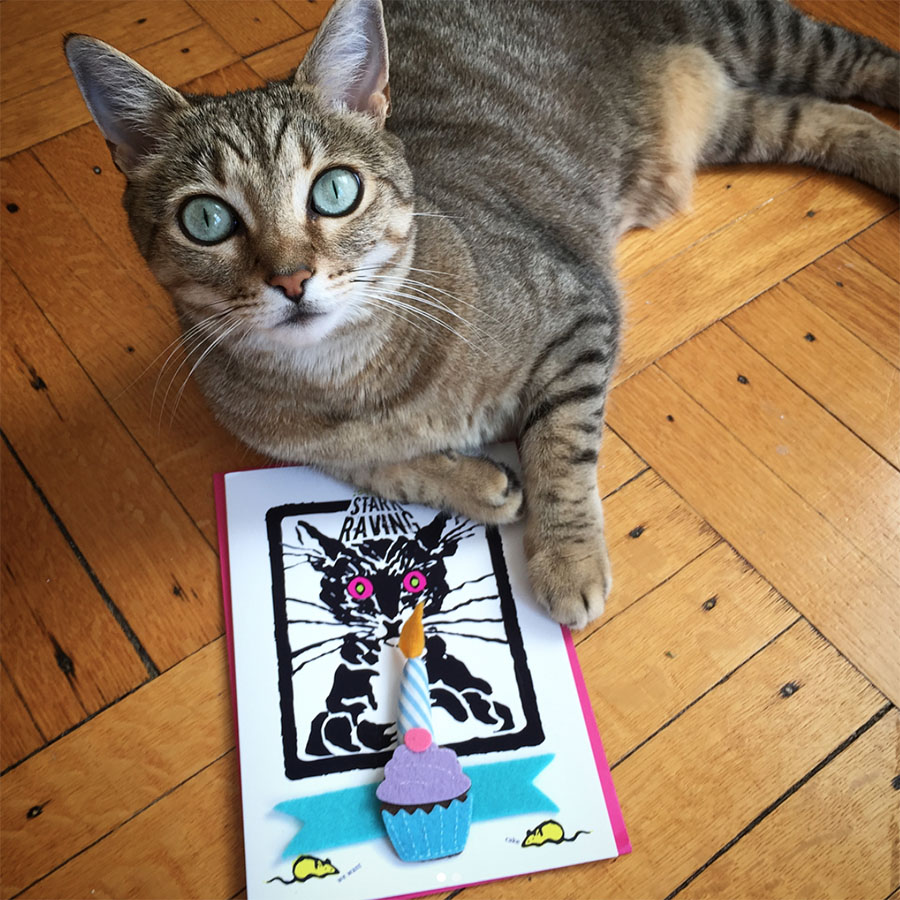 Ginger Baby & Catnip Birthday Card