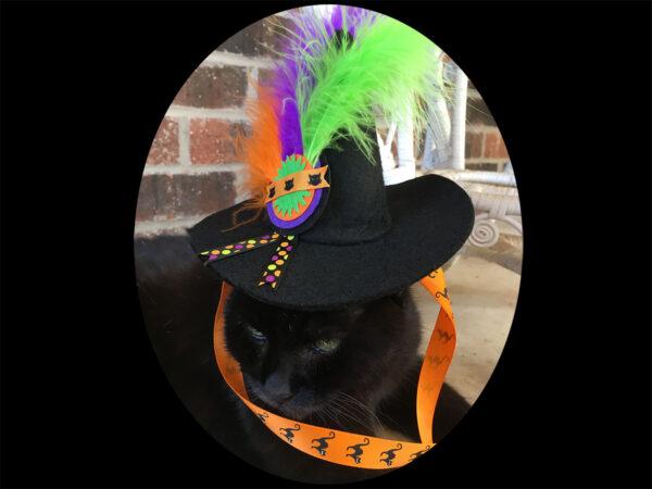 Wolfie Wears Halloween Cat Hat