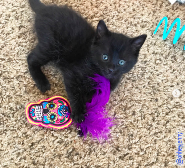 Kitten & Sugar Skull Catnip Toy