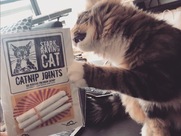 Moose & Catnip Joint 3-pack